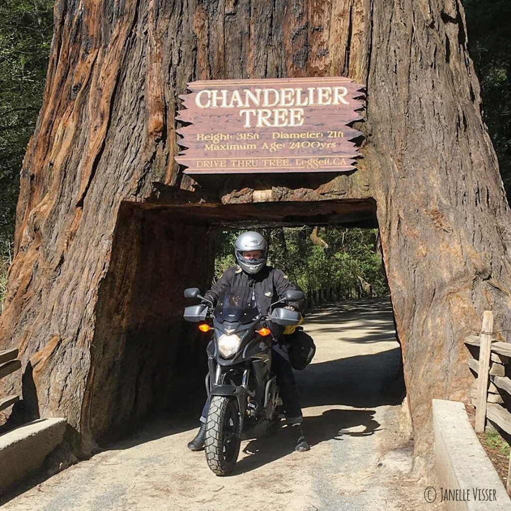motorcycle driving through Chandelier Tree