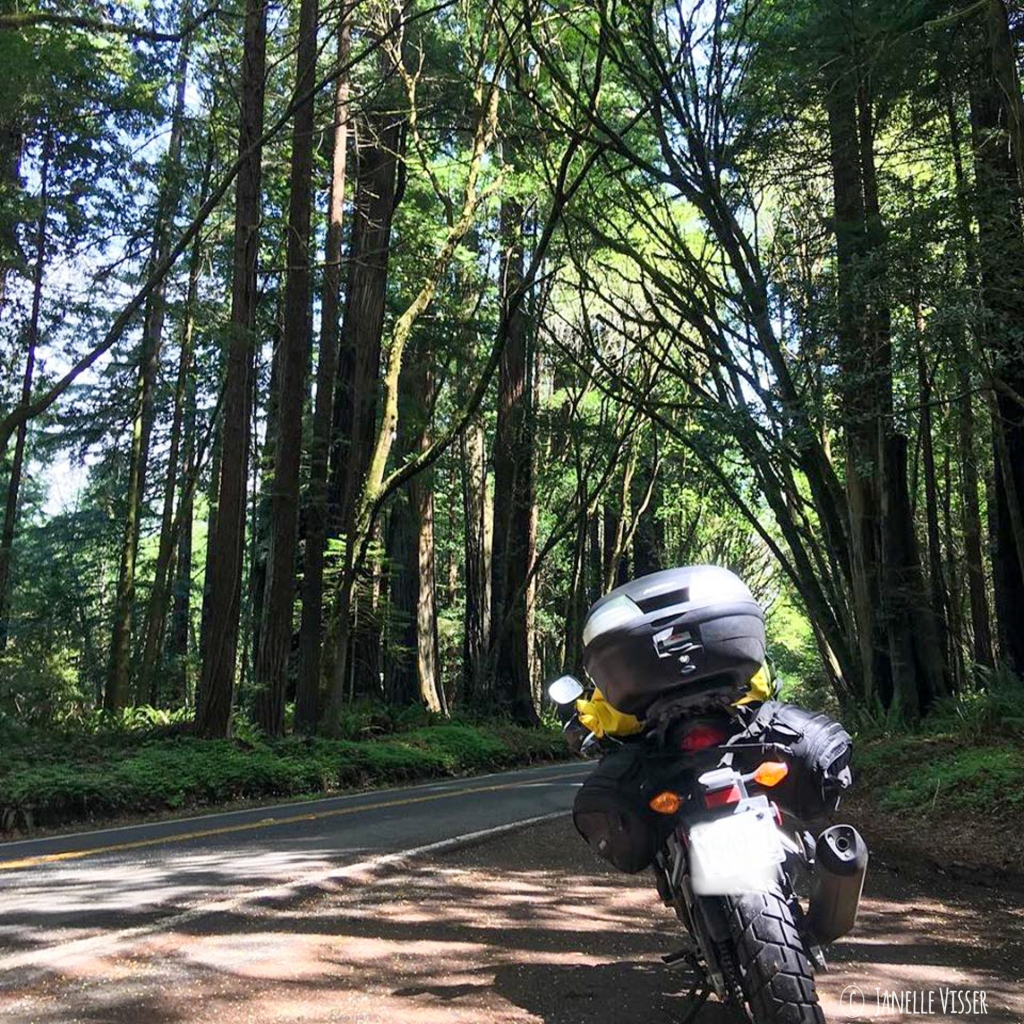 Motorcycle entering the Avenue of the Giants